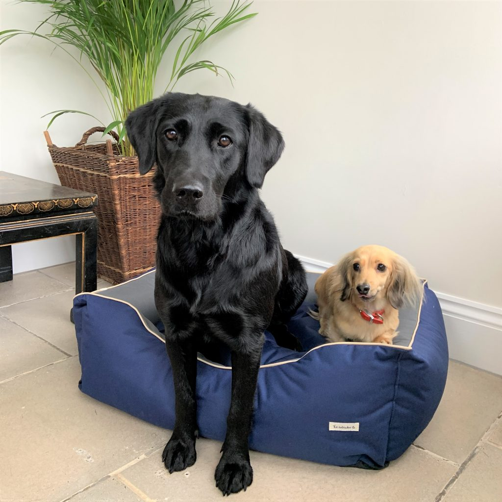 The Labrador Co.-Waterproof Bed